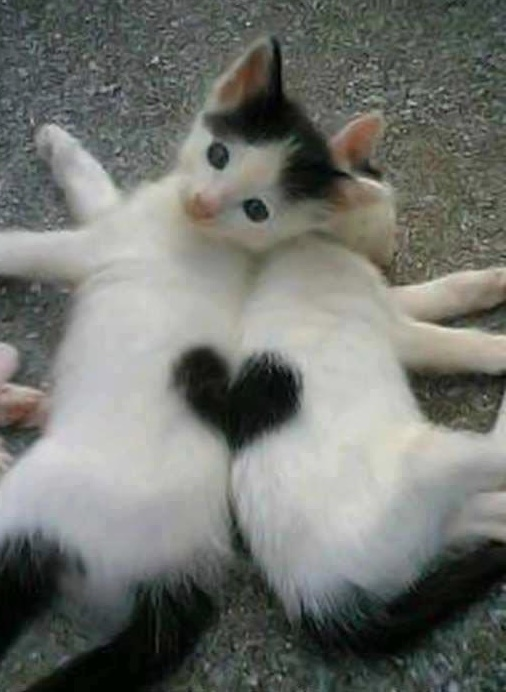 Let S Talk Great Partnerships Valentine S Day And Cute Kittens